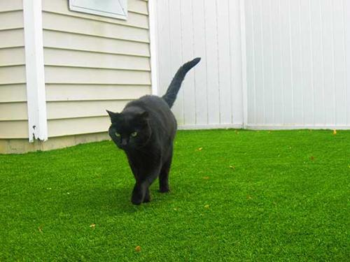 cat-on-artificial-grass