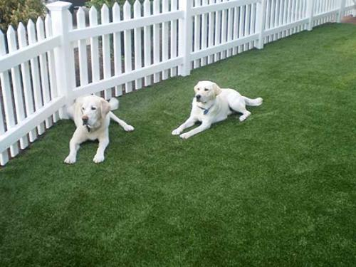 labs-on-dog-grass